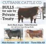 Bulls for sale by Private Treaty