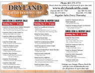 Dryland Cattle Trading Cattle Sale
